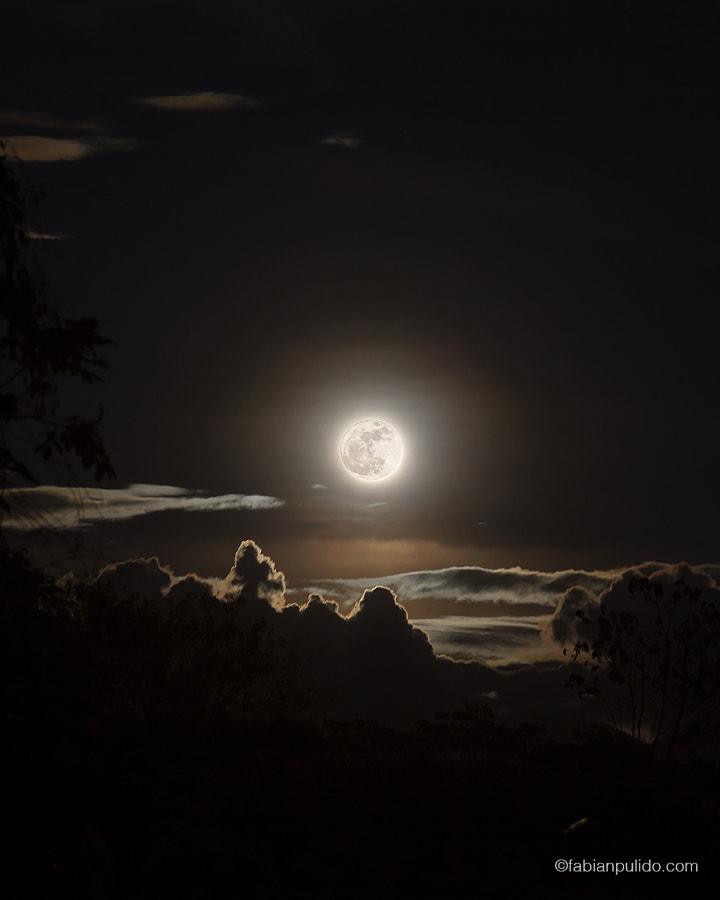 Hunter's Moon by Fabian Pulido Pardo on 500px.com