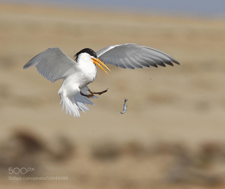 Photograph Ooooops! by Salah Baazizi on 500px