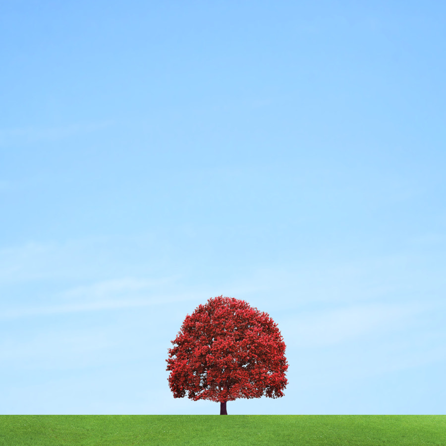 Lonely tree by Pascal Krumm on 500px.com