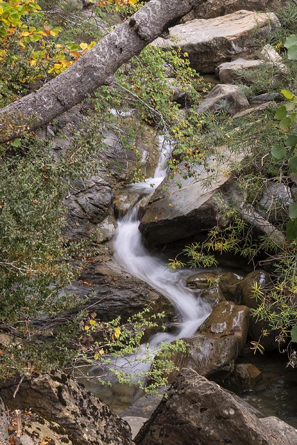 White snake by Ana V. on 500px.com