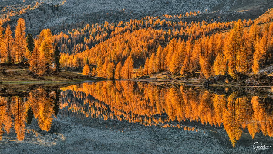 **larches on fire** by gubido  on 500px.com