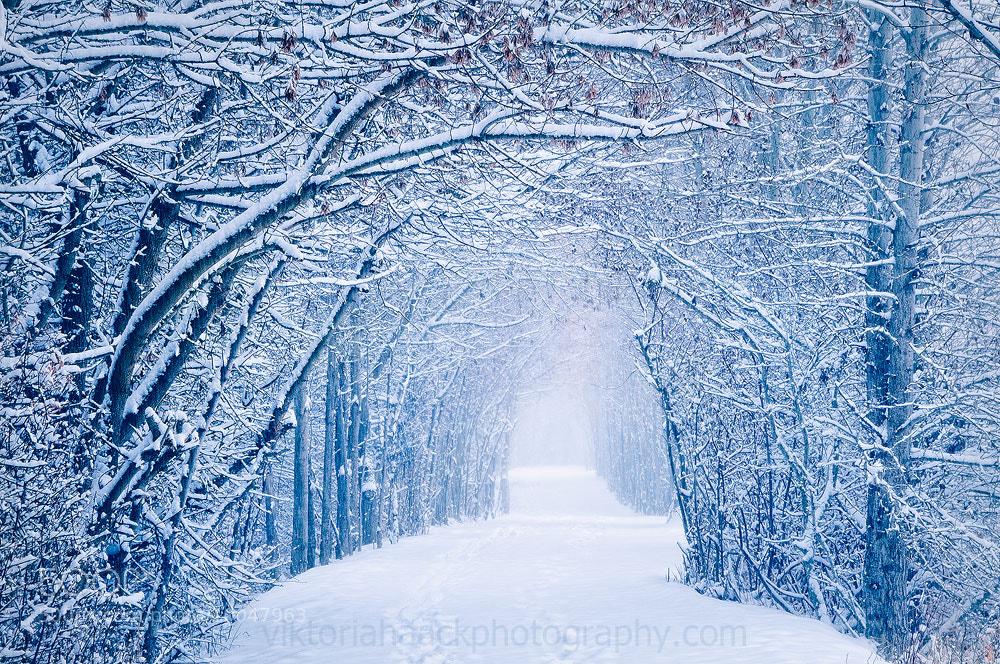 Photograph snow tunnel by Viktoria Haack on 500px