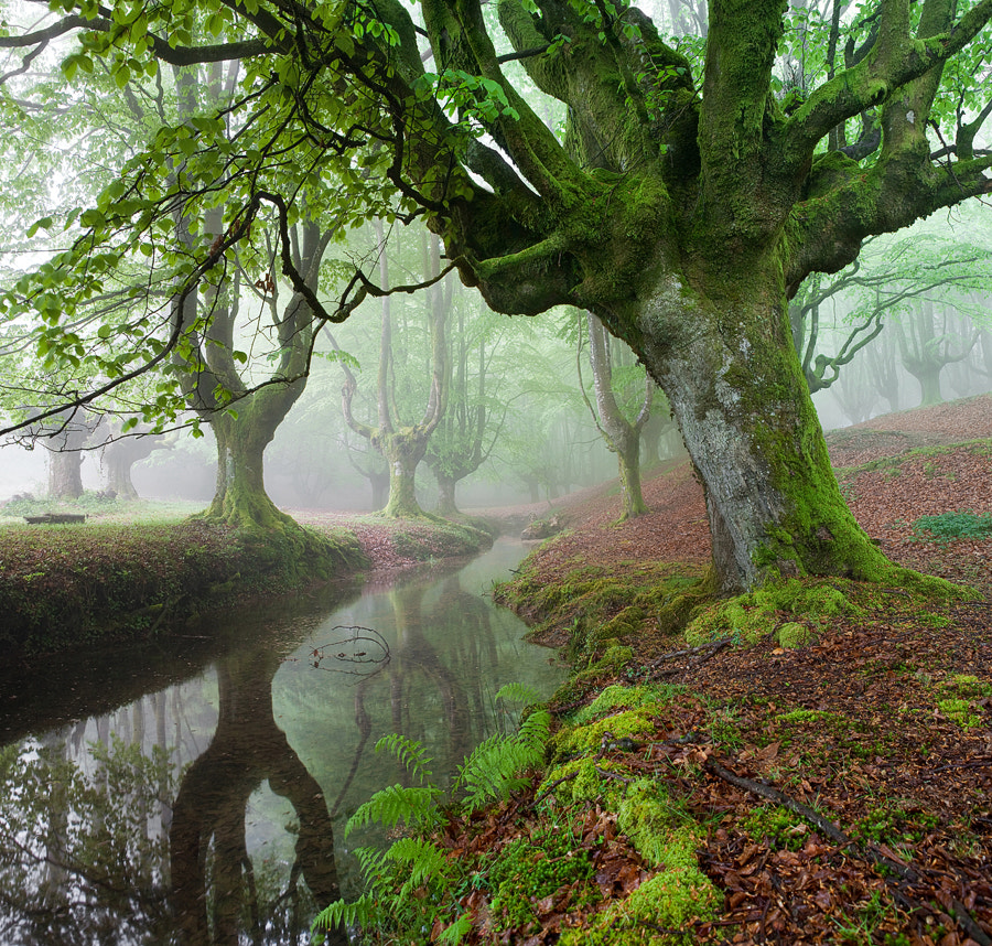 "Photograph ""The FOREST MARAVILLADOR I"" / ""El BOSQUE MARAVILLADOR I"" by Juan PIXELECTA on 500px"