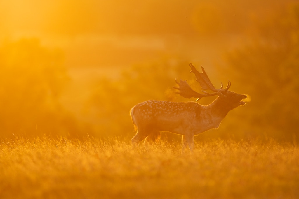 Photograph tranquil by Mark Bridger on 500px
