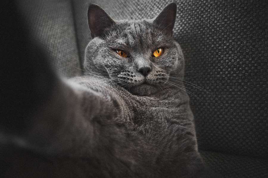 Photograph Can't resist the hype! #Selfie by Pelle Cat on 500px