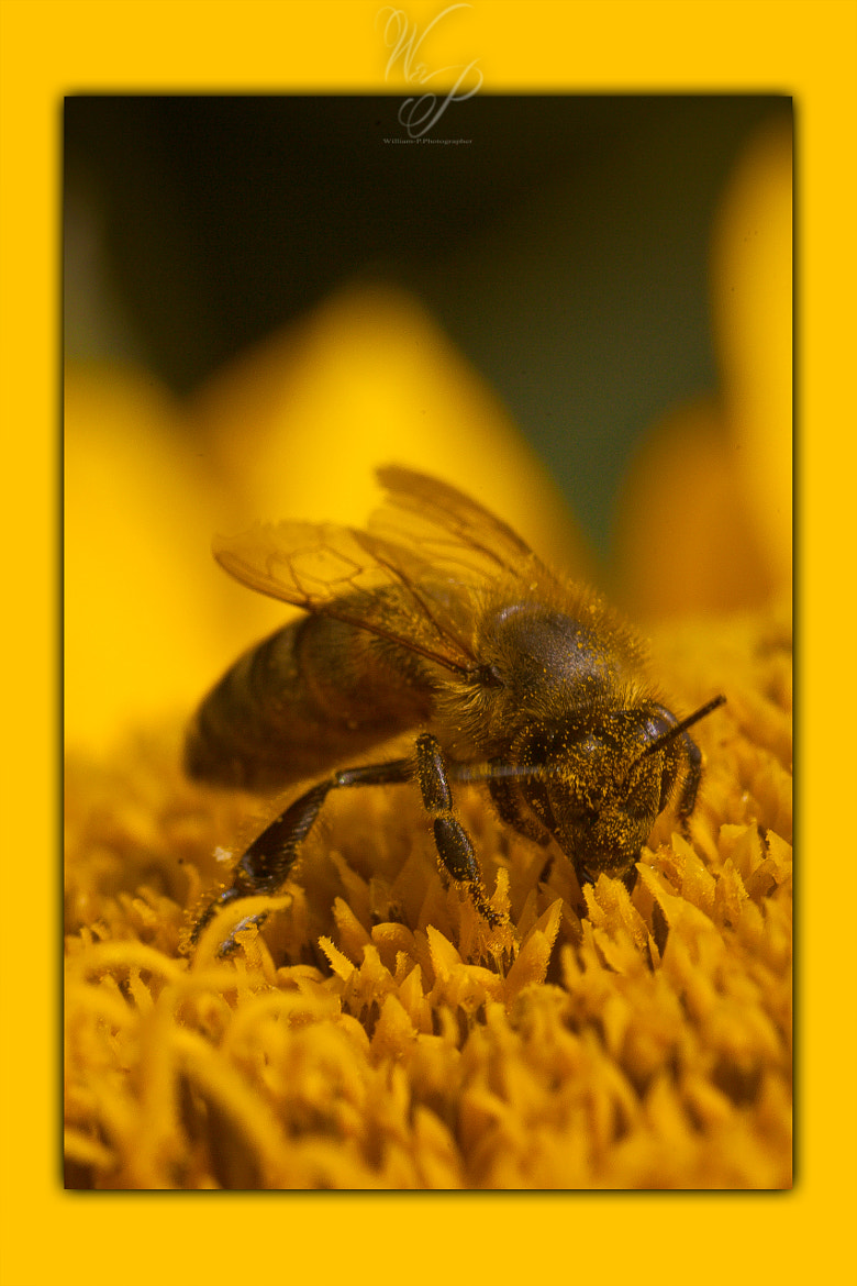 Photograph **Bee** by Will Photographer on 500px