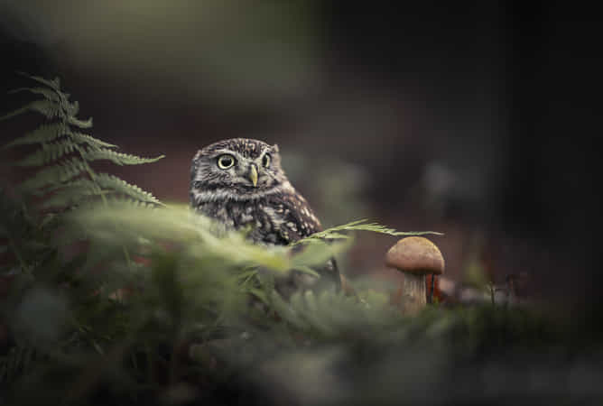 Forest by Tanja Brandt