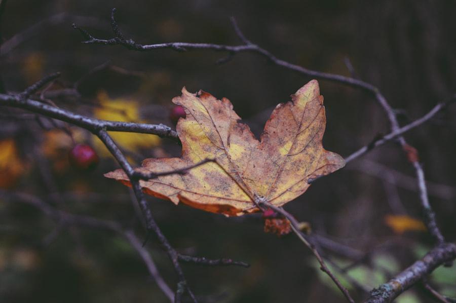 fallen leaf by Mirjana  on 500px.com