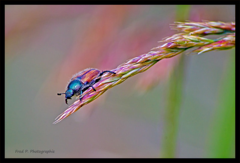 Photograph On the Edge by Fred Picard on 500px