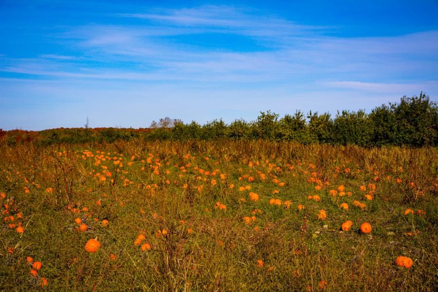 Pumpkins  by Milu Voica on 500px.com