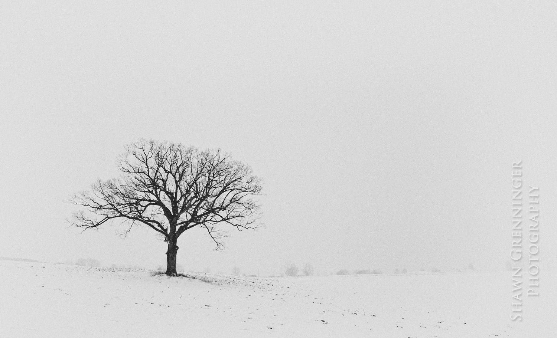 Tree by Shawn Grenninger / 500px