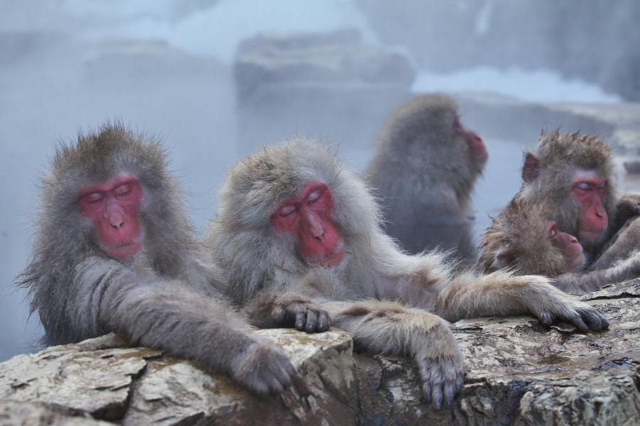 Reasons to visit Asia in the winter: Snow Monkeys! (Photo: Masashi Mochida on 500px.com)