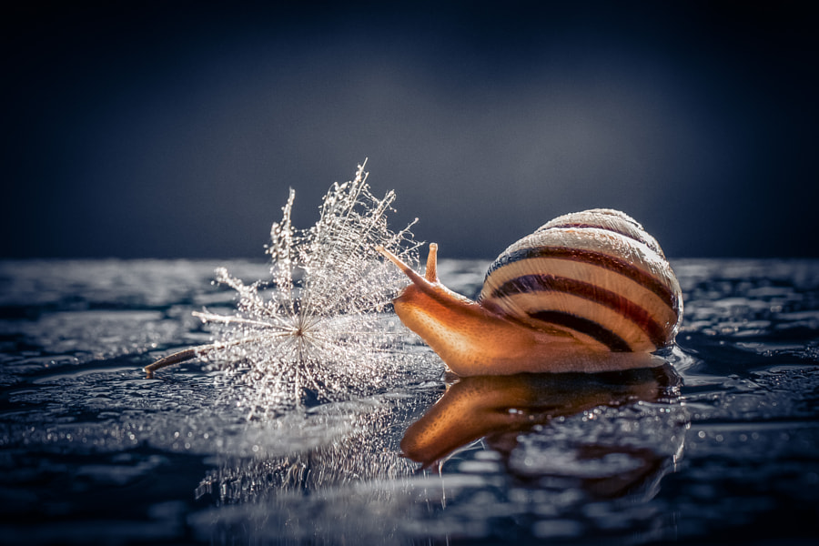 Photograph Snail by Alla Dorofeeva on 500px