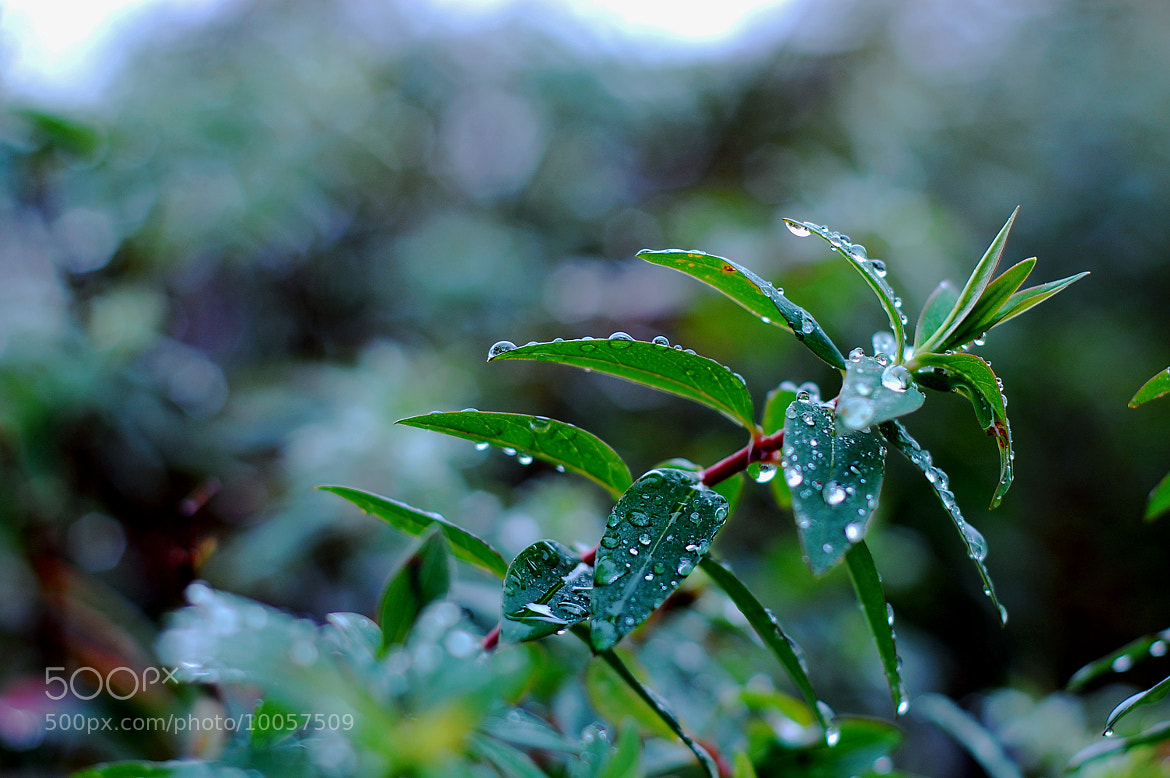 Photograph Droplets by Jack Gunns on 500px