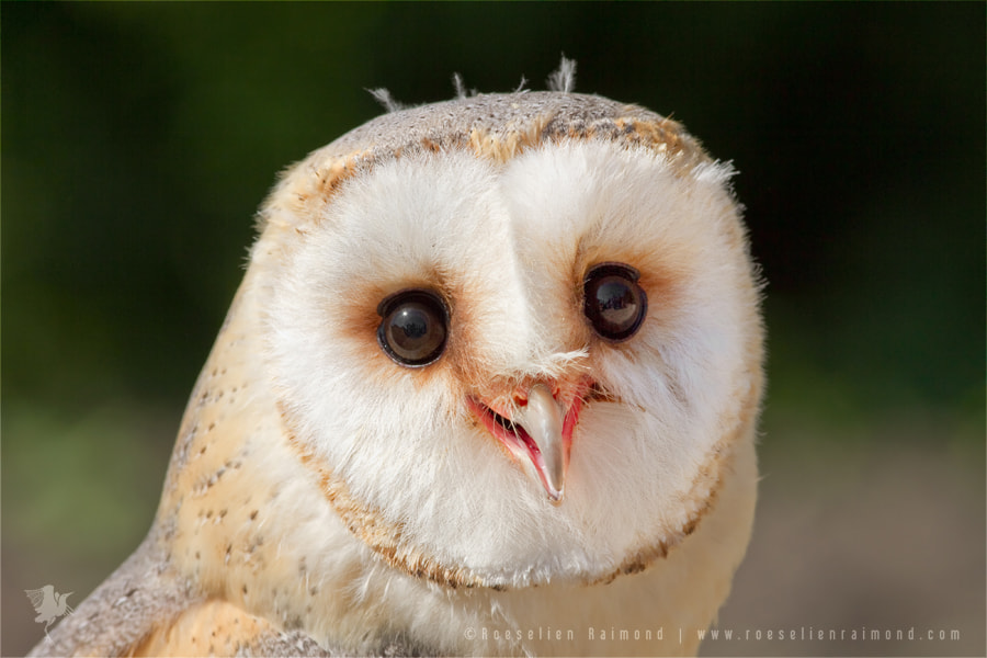 Photograph Happy Owl is Happy by Roeselien Raimond on 500px