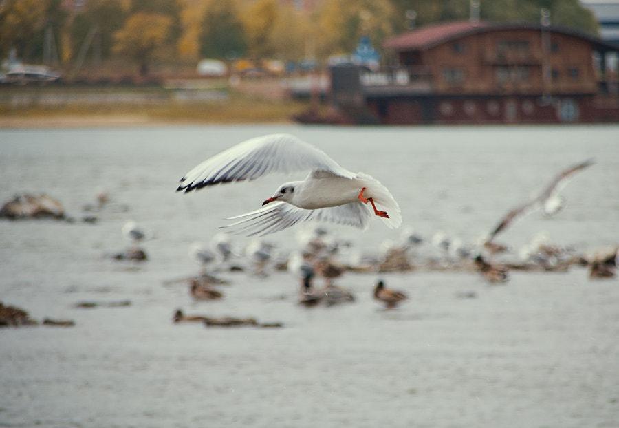 Полёт by Evgeniy Bruskov on 500px.com