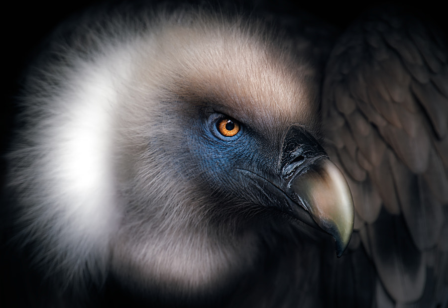 Vulture Look by Santiago Pascual Buyé on 500px.com