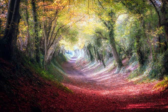 Old Mill Lane by Brett Gasser