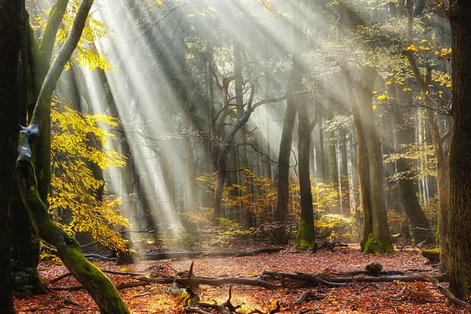 Forest Rise by Lars van de Goor
