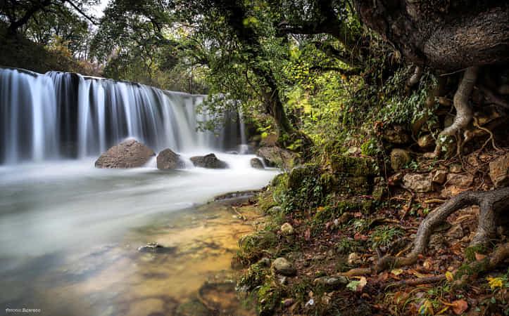 Jungle by Antonio Bejarano