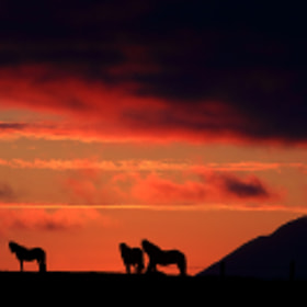 Horses in the sunset by Jon Hilmarsson (Jonhilmarsson)) on 500px.com