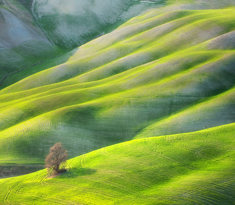 Photograph Tree by Marcin Sobas on 500px
