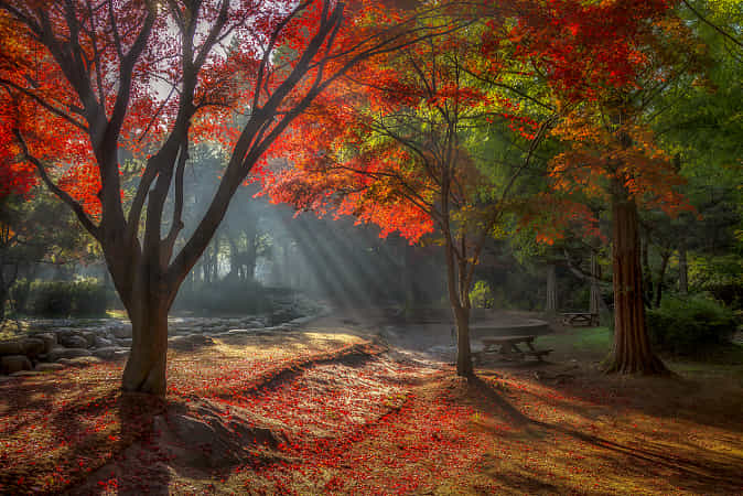 Autumn morning by c1113