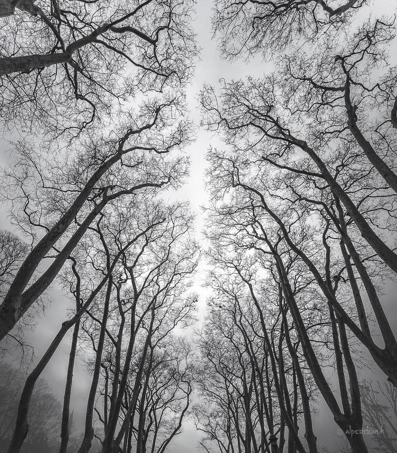 fractal poetry