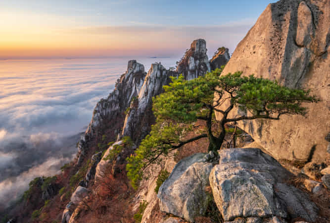 Other pine tree of Dobongsan by jae youn Ryu