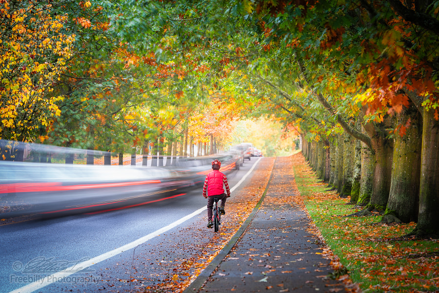 Man riding bicycle on street surrounded by autumn foliage while by William Freebilly photography ✅ on 500px.com