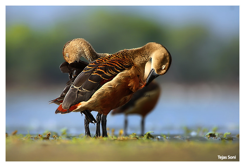 "Photograph ""Love duet#1"" by Tejas Soni on 500px"
