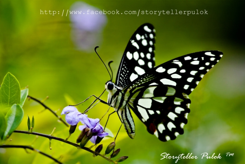Photograph NAT GEO BUTTERFLY :P by Pulok Kumar on 500px