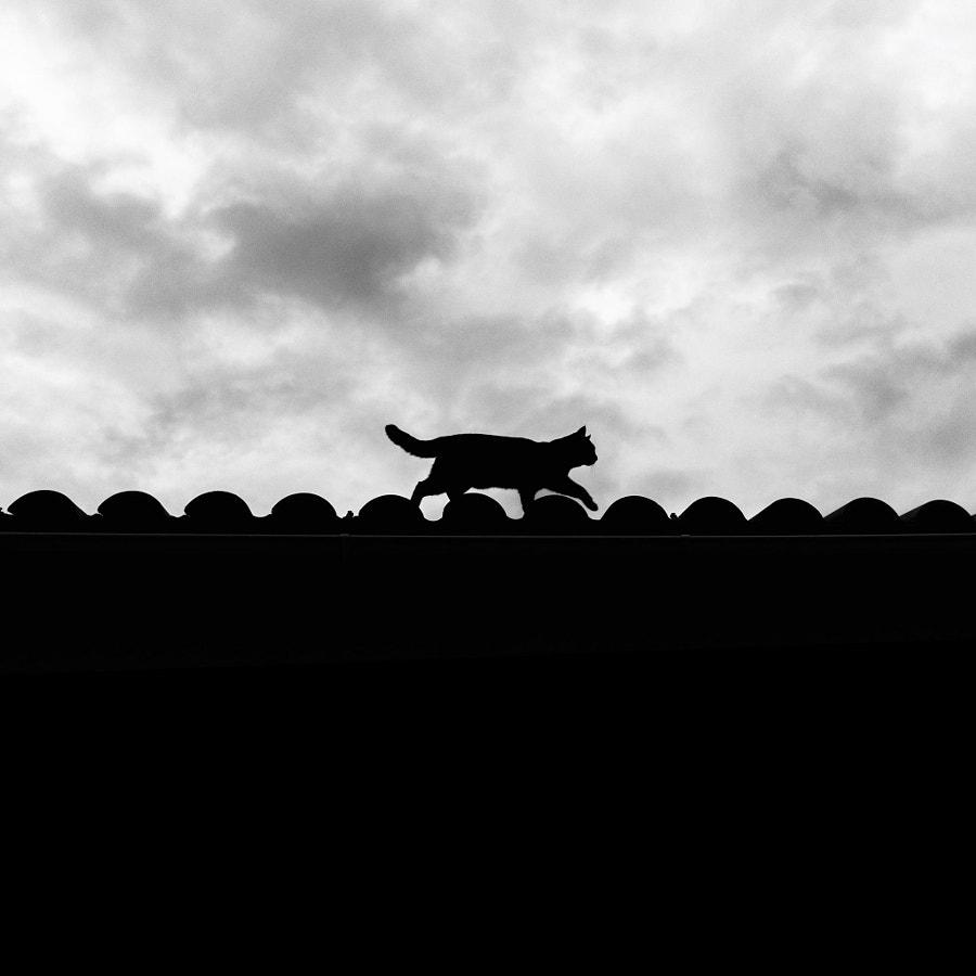 屋顶上的轻骑兵 by Lavande  on 500px.com