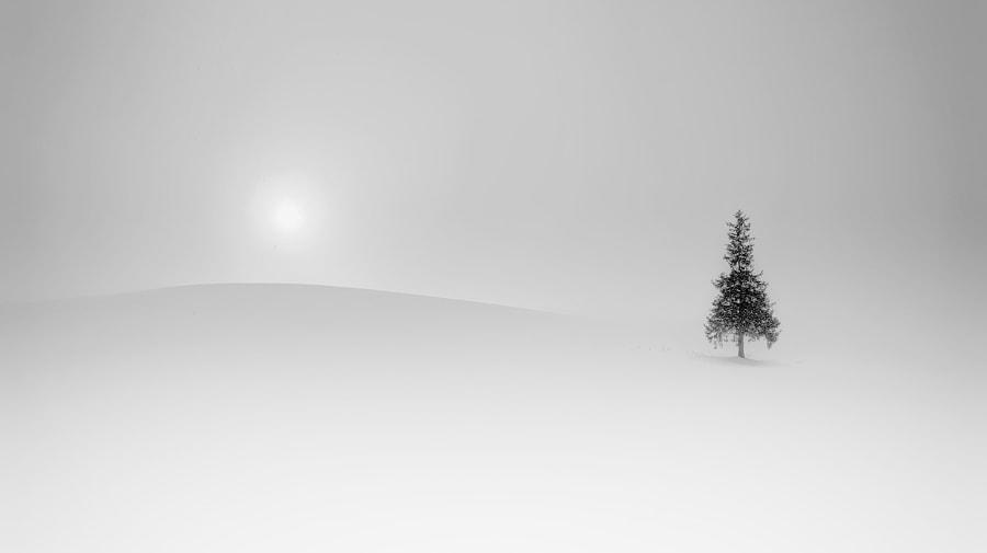 クリスマスツリーの木 by Kousuke Toyose on 500px.com