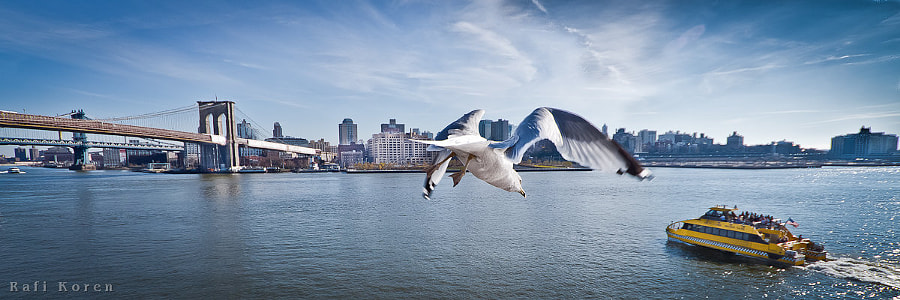 The Seagull Dive