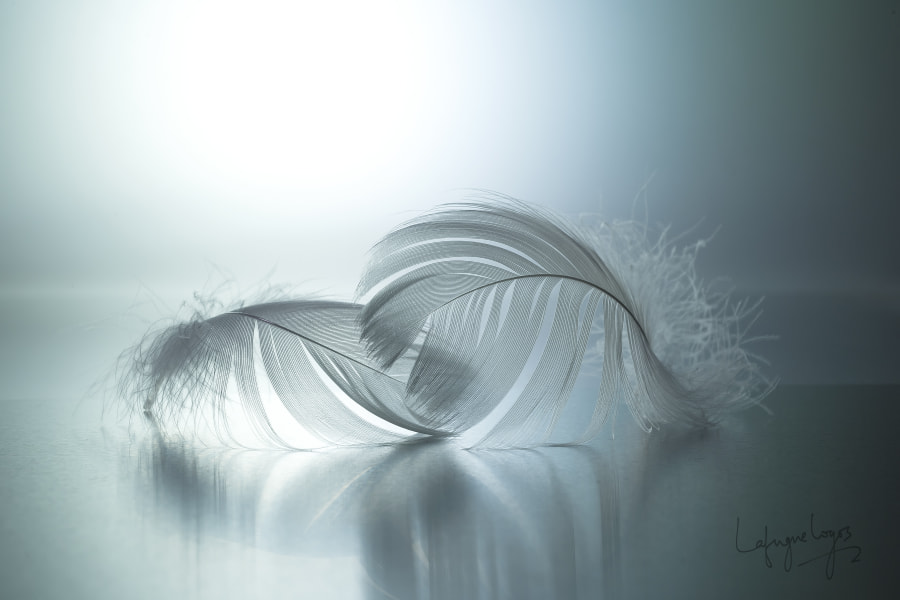 We're All Alone by Lafugue Logos on 500px.com