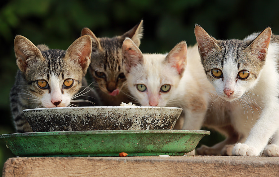 Photograph me-ow  , We need some food by Prachit Punyapor on 500px
