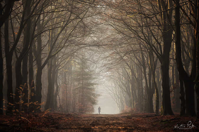 Alone in the forest by Martin Podt