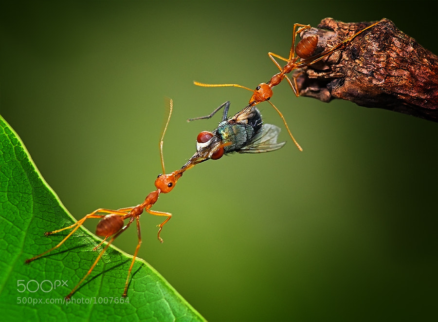 Photograph Tug Of War by Uda Dennie on 500px