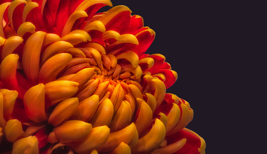 Fiery Mum by Olaf Holland on 500px.com