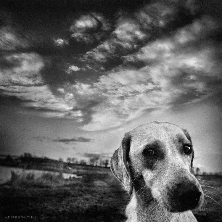 Photograph There Once Was A Dog by Denis Buchel on 500px