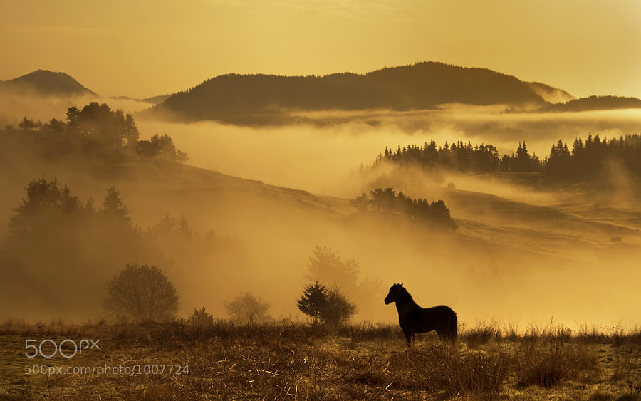 Photograph Morning by Petar Krusev on 500px
