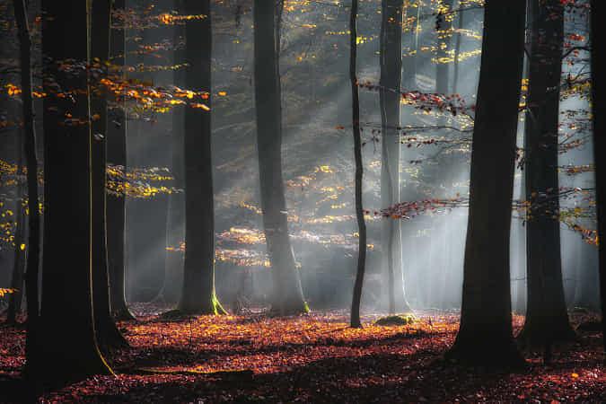 Autumn Glow by Carsten Meyerdierks