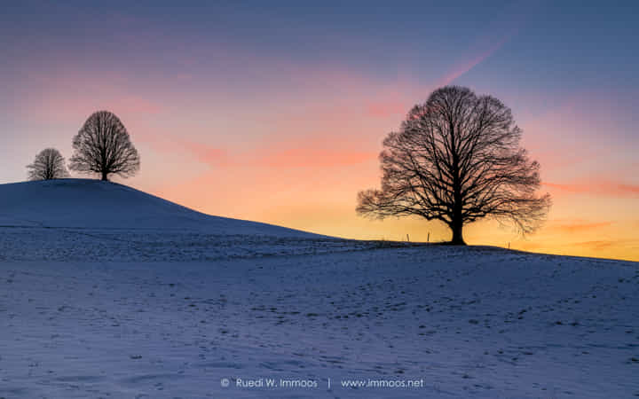 Winter evening with the lonely trees by Ruedi & Birgit Immoos