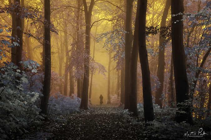 Entering wonderland by Martin Podt