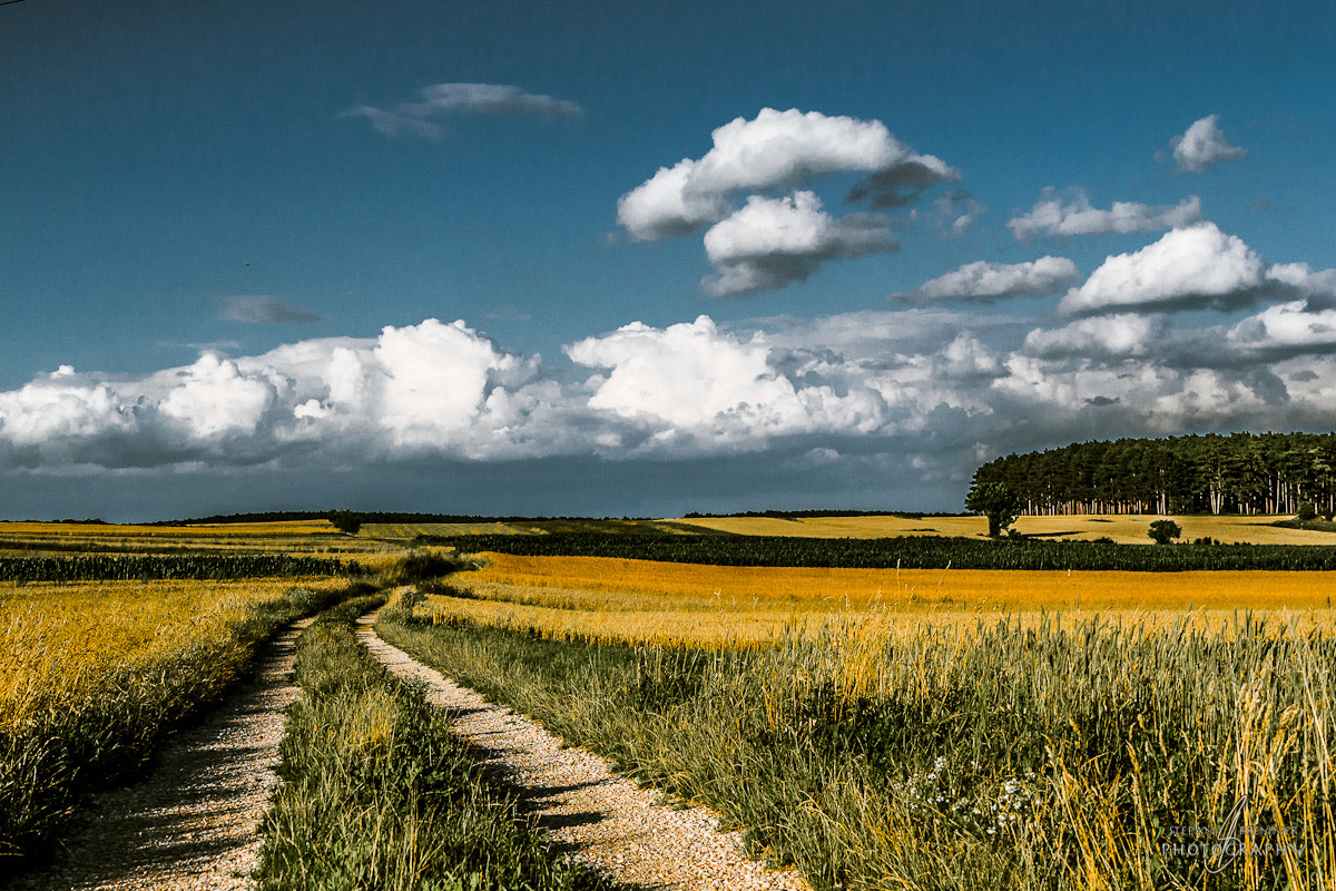 Photograph Country Road by Stefan Brenner on 500px