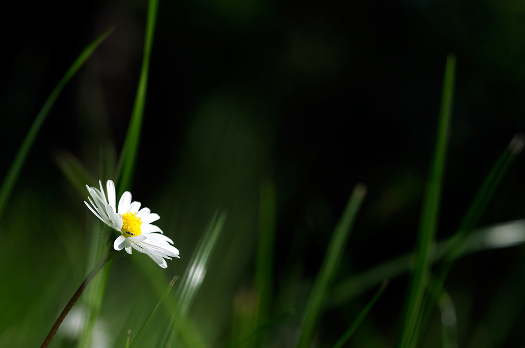 Photograph In the garden by Mikael Sundberg on 500px