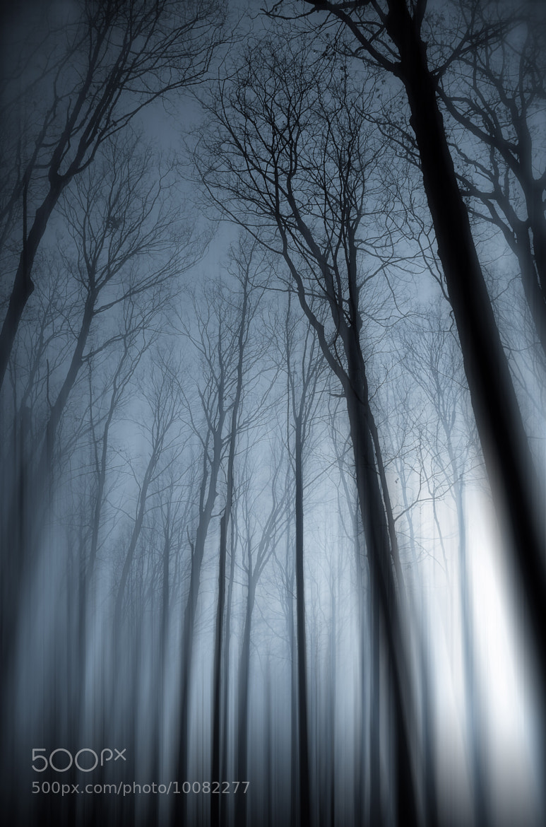 Photograph Out Of The Mist by Dana McMullen's Imageroom on 500px