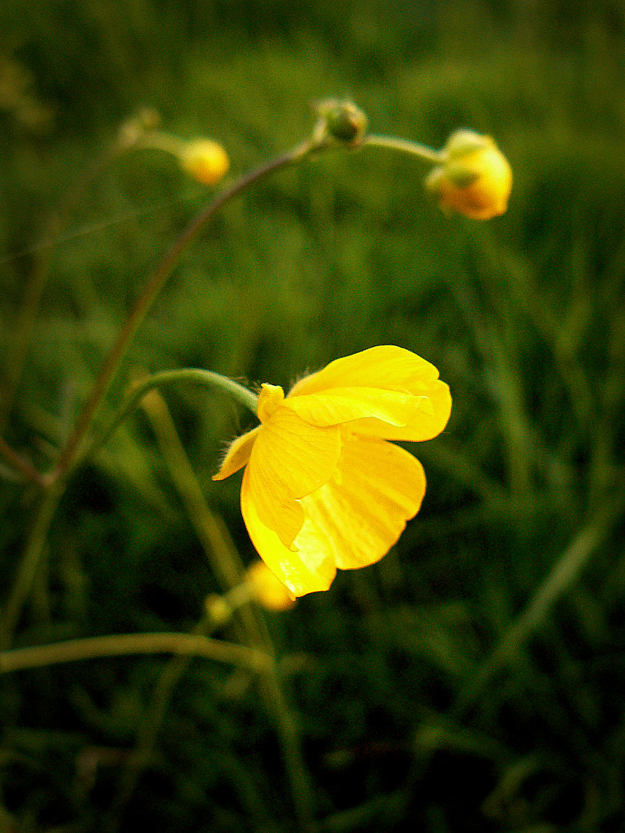 Photograph Yellow by Oliver Westphal on 500px