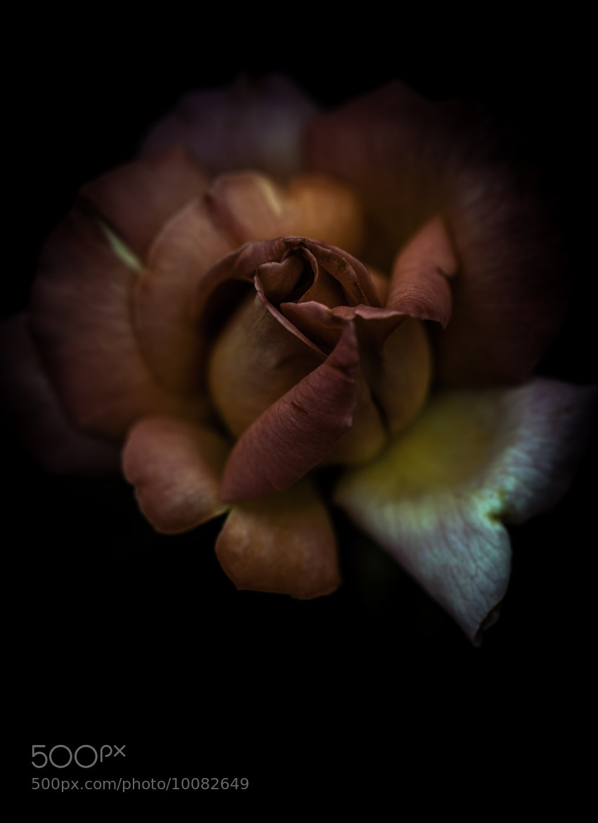 Photograph Two hearts hiding by Alan Shapiro on 500px